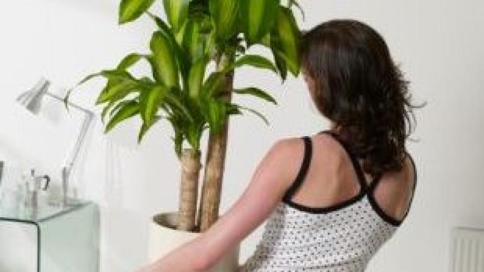 Plantyas+de+inmteriores+21