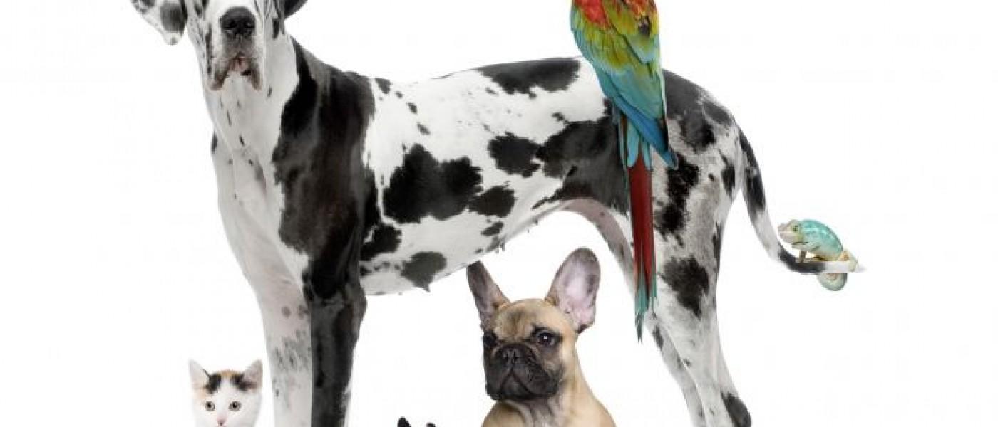 Diferentes Mascotas En Casa Xl 668x400x80xX1